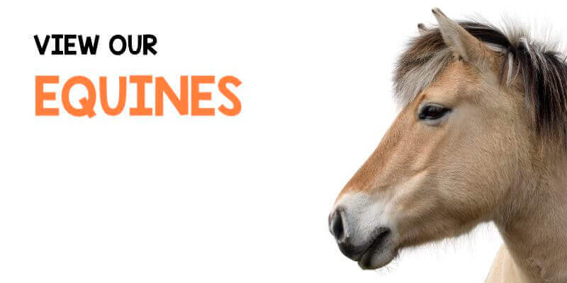 View our Equines